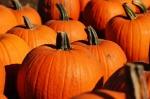 pumpkin-970236_640